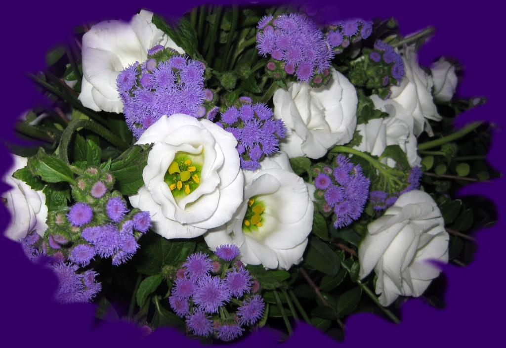Nature___Flowers_Beautiful_flowers_Eustoma_(Irish_Rose)_on_a_bed_in_the_garden_067311_.jpg