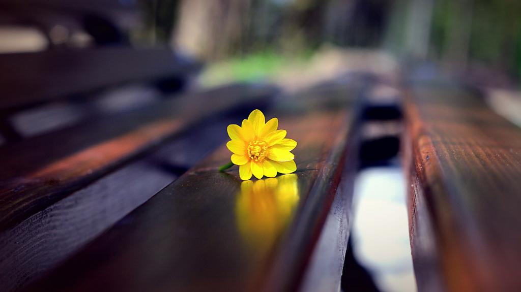 48-zheltyj-cvetok-na-skamejke-makro-oboi-1366x768.jpg